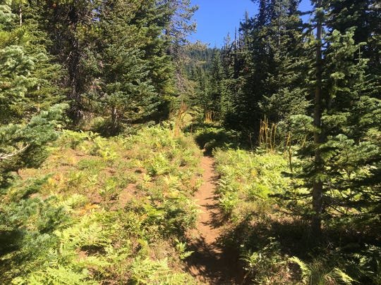Open forest on Maxwell Butte Trail