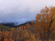 Fields of amber and gold paint a picture in the hills of ruidoso as fall creeps in.