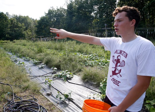 Matthew Beck checks the progress of vegetables growing inside the garden at The Clover Project in Hyde Park on August 30, 2019. The Arlington High School senior decided to start the project in February 2019.