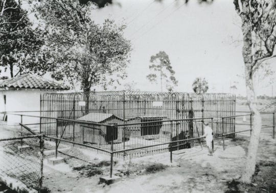 The Pocahontas Park Zoo acquired its first bear, Alice, in 1925, a purchase by Senator T. J. Campbell for $200.  Small and bad-tempered, she arrived by express from La Belle. That same year a bobcat was added, a local animal captured and donated by J.B. Tippin. They joined the alligators, turtles and raccoons already in residence. Suzie the bear was later donated by Arthur Hill, Jr. to be a companion to Alice. Within a month Suzie died because of human food that was given to her. Other zoo denizens were a fox and an owl.