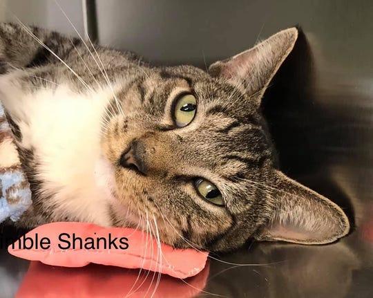 Shimbleshanks