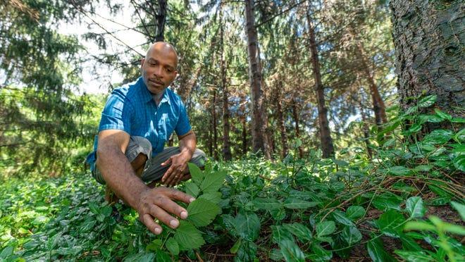 Coronavirus Gardening Hobby And Self Sustainability Create Interest