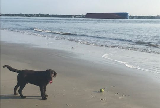Short List reader Denise Rocawich and her dog Samuel visited Jekyll Island, Georgia, the day after rescuers freed four trapped crew members from a capsized cargo ship.