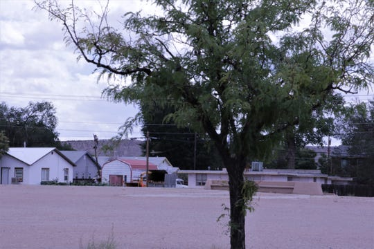 A tree grows beside a parking lot at the old Tibbetts Middle School property in Farmington.