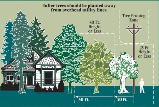 Edison's pruning zones