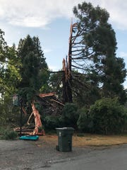 A tree hit by lightning on 13th Street SE between Peace Street SE and Vista Avenue SE, during the stroms that hit the Salem area during the afternoon September 10, 2019.