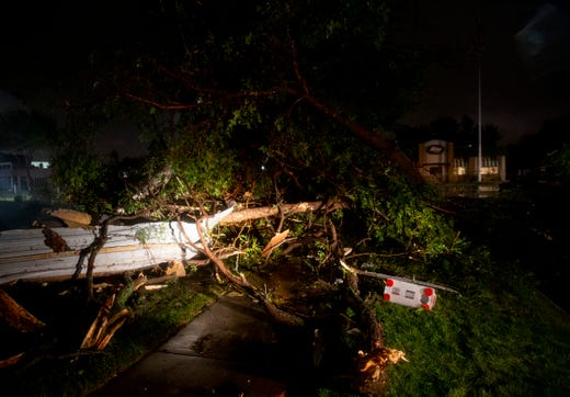 Trees and debris lay on the sidewalk near 41st Street on Tuesday, Sept. 10, 2019.