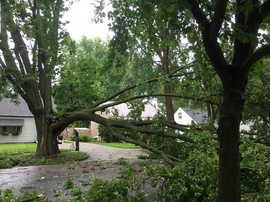 Jana Wattier rakes fallen leaves in her front yard in the shadow of her large damaged tree.