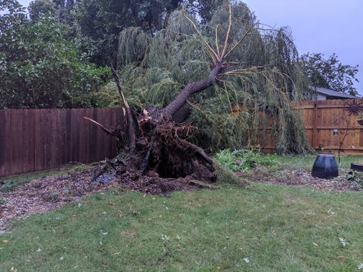 Damaged tree in backyard at 26th and Marion.