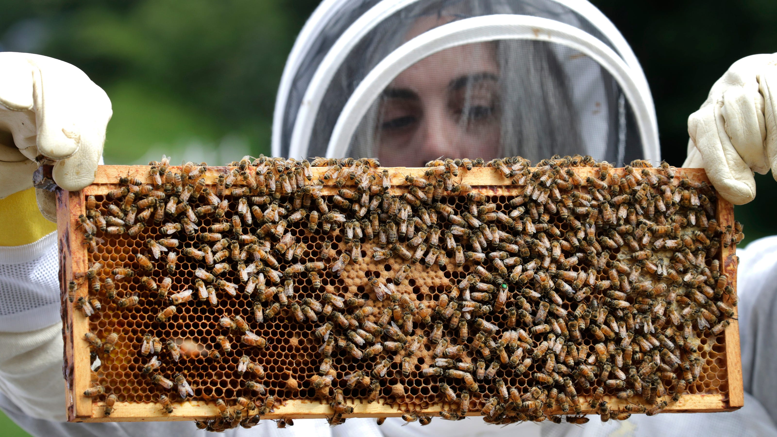 Картинки про пчел и улей