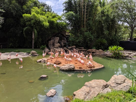 Flamingos at Houston's Zoo. It's one of many things you can see in Houston with kids.