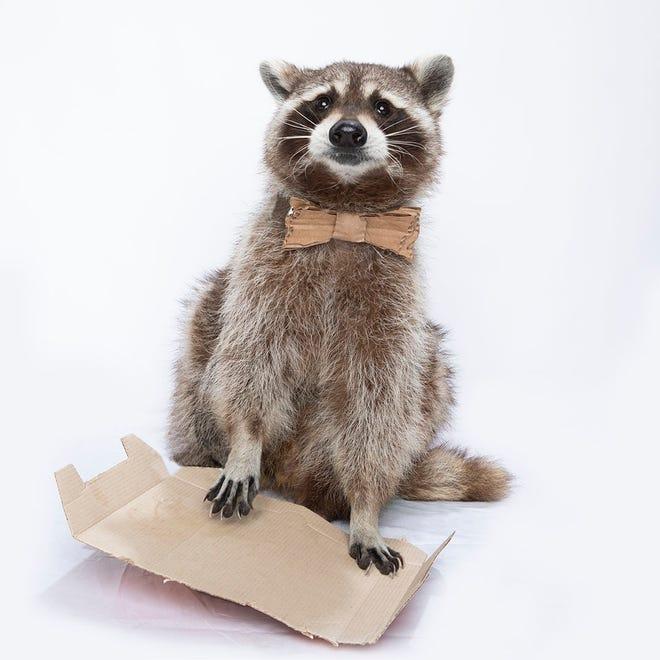Learn the secrets of recycling cardboard with Carlos Cardboard.