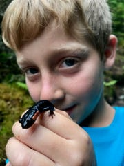 This red-cheeked salamander has found a new friend. July 2, 2017.
