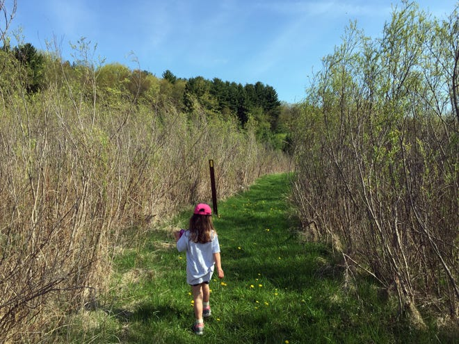 Mara Sherwood, then 4, follows the path on the Lapham Peak segment of the Ice Age Trail, snack cup in hand.