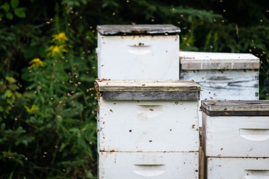 Honey bees buzz around hives owned by Arnold Apiaries Inc. in Deckerville Wednesday, Sept. 11, 2019. The company operates about 4,000 hives, each with between 60,000 and 80,000 bees.