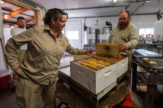 Jamie Ostrowski, owner of Arnold Apiaries Inc. in Deckerville, left, looks at frames as Mike Lawler removes them from open hive boxes Wednesday, Sept. 11, 2019. Once the frames are removed, they are fed into a machine that scrapes the caps off the honeycombs.