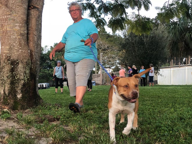 "A volunteer walks ""Beans"" on Wednesday, September 11, 2019. Beans is a male rescue dog who tragically lost both of his owners to Hurricane Dorian."