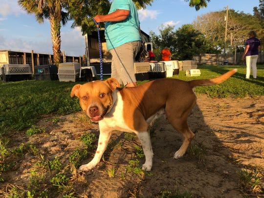 Beans, a male rescue dog, tragically lost both of his owners to Hurricane Dorian as it bore down on the Bahamas.
