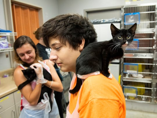 Ian Stiles, 15, lets a kitten sit on his shoulder at Animal Care in Greenville while looking for an animal to take home.