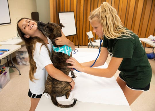 Amelia Agra, 12, left, gets licked by a dog while Josie Jensen, 13, listens to the dog's heat beat during Camp Animal Care at Animal Care in Greenville.
