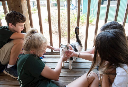 "Members of Camp Animal Care visit with ""Porch Kitty"" at Animal Care in Greenville."
