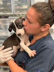 Nina Luczyszyn, a nurse with the Pennsylvania SPCA, holds a puppy recovered after a drug raid at a Philadelphia home.