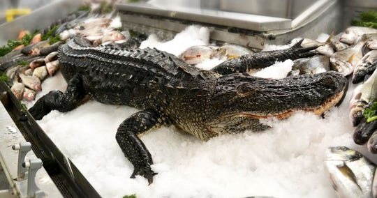 The gator at Jungle Jim's in Eastgate.