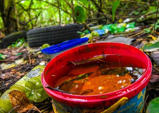 Insect larvae can be seen swimming in stagnant water trapped in a plastic cookie container found amongst illegally discarded items in the jungle near the Chalan Pago Bridge on Friday, Sept. 13, 2019.