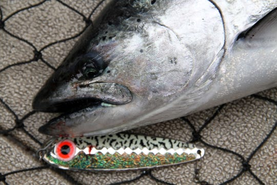 A chinook salmon and the spoon it was caught on are shown in a landing net during a fishing outing on the Wisconsin waters of Lake Michigan near Milwaukee.