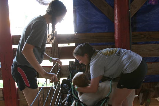 Katy Richard (right) gets an assist from a friend after her goat Baxter got hung up in her folding chair. The poorly behaved goat earned Richard, a Norfolk sophomore, a number of ribbons in Baxter's categories.