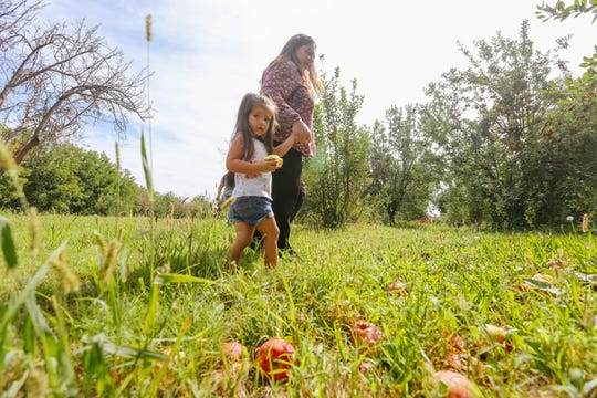 Kaylee Estrada and grandmother Patsy Estrada pick apples at U-Pick Mesilla Valley Apple Orchard in Las Cruces on Friday, Sept. 13, 2019.