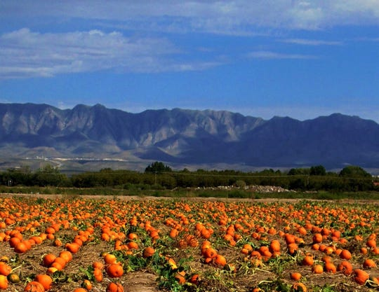 The pumpkin patch at La Union maze shows the rich colors of fall adorned by the breathtaking view of the mountains.