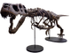 Skeleton of Victoria the T. rex, will be on display at the Arizona Science Center from Nov. 17, 2019-May 25, 2020.