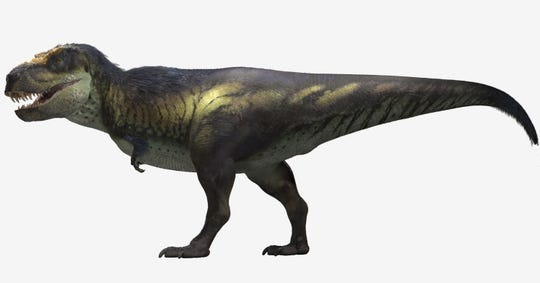 An artist's rendering of Victoria the T. rex. Based on the skeletal remains, it's estimated that the dinosaur would have been about 40-feet long and 12-feet tall.