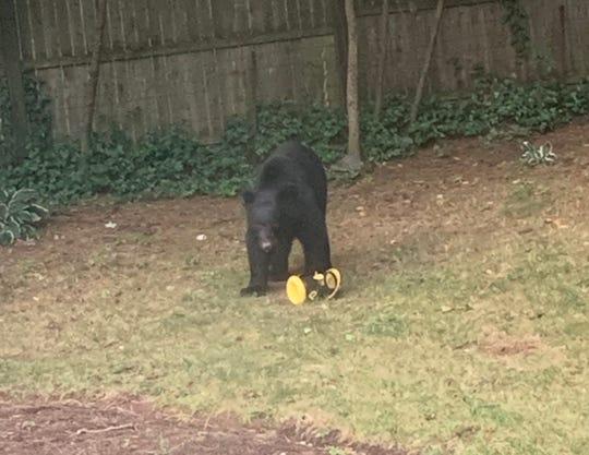 A black bear rummaged through a bird feeder at a home on Virginia Street in Tappan on Sept. 13, 2019.