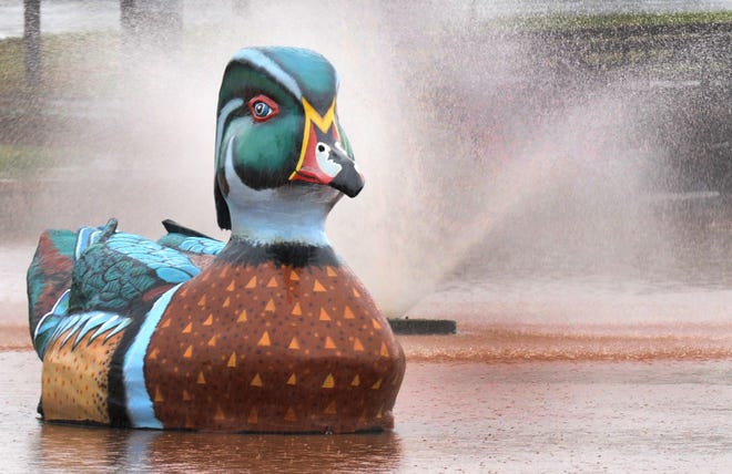 Wally the Duck enjoys an early morning shower not only from his South Weeks Park fountain but also from an early morning rain that treated the area with a much needed late summer shower.