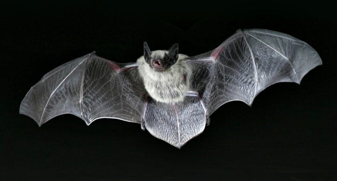 A bat found in Alamance County tested postive for rabies.