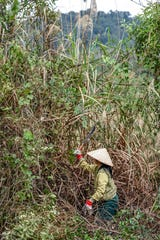 A local Lao worker clears a section of brush with a sickle on Feb. 1, 2019, to remove a quarter of a century worth of excess brush that was covering a previous excavation site.