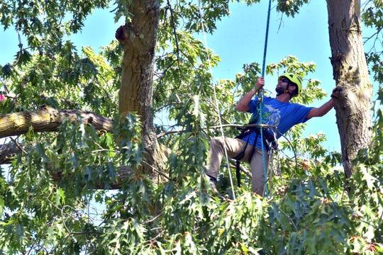 Jacob Forella, 27, of White Lake anticipates his next move during the 25th Michigan Tree Climbing Championship.