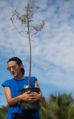 Rabbi Nicole Luna, of Temple Beth El in south Fort Myers, helps plant hundreds of native trees on six acres of land belonging to the temple on Sunday. The new Temple Preserve & Memorial Gardens will be located alongside the Crown Colony golf course and the Stonebridge neighborhood. OneTree.org, a local nonprofit, led the effort.