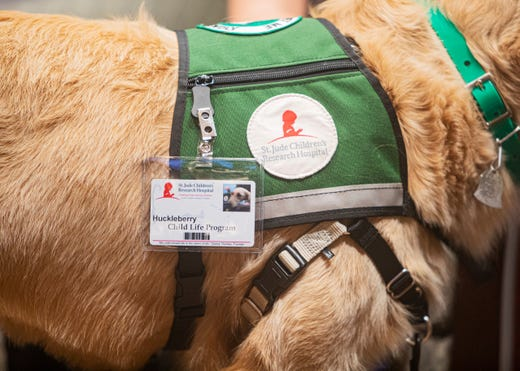 Service dogs Huckleberry and Puggle join St. Jude to help young patients undergoing treatment