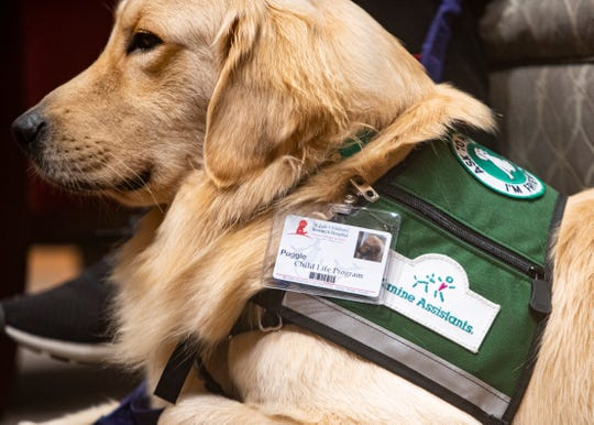 Huckleberry, a male goldendoodle, and Puggle, a male golden retriever, are official St. Jude employees. The canine pals uniforms consist of green service vests and ID badges.