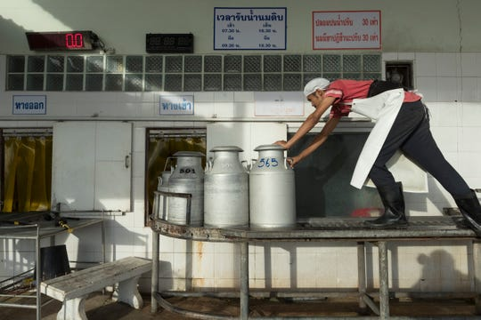 A worker moves cans of fresh milk dropped off by farmers so they can be weighed and tested at Prateep Farms in  Pak Chong, Thailand.