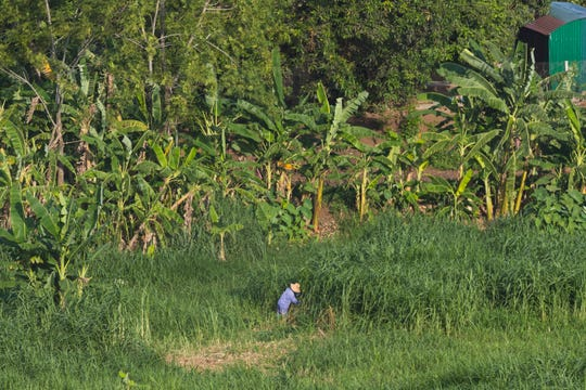 A farmer cuts grass on a tiny farm adjacent to TH Milk's giant operations in Nghia Son, Vietnam.