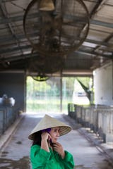 Organic calf nursery worker Binh Thi Dinh adjusts her hat underneath the powerful fans used to keep the cattle cool at TH Milk's operations in Nghia Son, Vietnam.