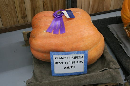 This giant pumpkin received a Best in Show ribbon at the 2019 Baxter County Fair.