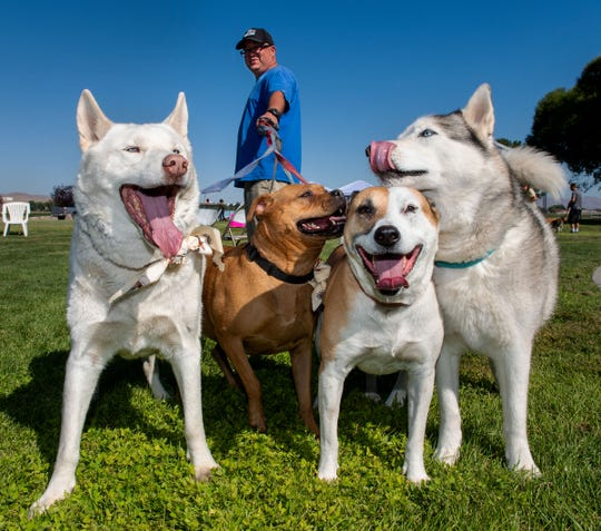 Paul Herzig takes dogs Kenai, Samson, Marley and Chloe for a walk at the Pet Lovers Day event in Yerington.