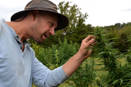 Mike McCue's hemp farm, Mill Race Hemp Farm, in Verona is a legal hemp farm. McCue is in his first year of growing hemp with the hopes of selling it to be made into CBD oil.