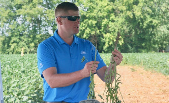 Mike Gronski, Pioneer Seeds agronomist, shows the difference of soybeans roots from various planting depths.