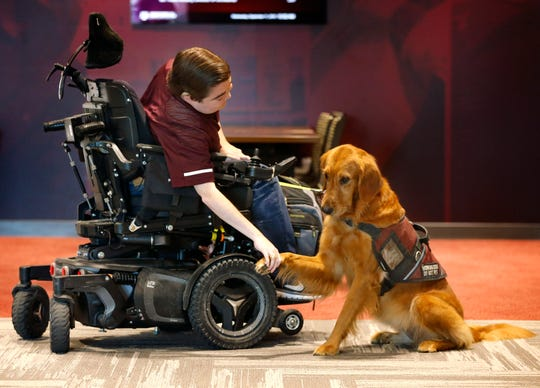 In this Sept. 11, 2019, photo, Texas A&M graduate student Kyle Cox, who has Duchenne muscular dystrophy, shakes Amber's paw before heading to symphonic band rehearsal at the new Music Activities Center of the school in College Station, Texas.